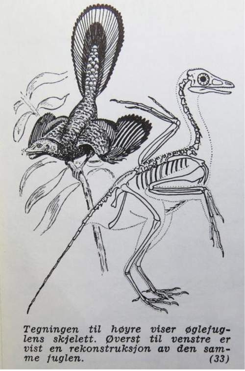 Fuglenes fasinerende utvikling og oppbygning